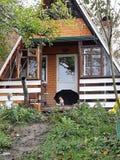 狗在房子附近的伞下 免版税库存照片