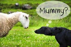 狗在挪威遇见绵羊,文本妈咪 免版税库存照片