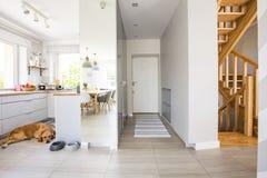 狗在有窗口和地毯的厨房里在h大厅内部  免版税库存图片