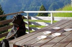狗在桌和空的茶碟上 库存图片