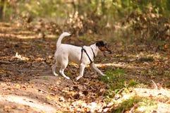 狗在森林里 免版税库存照片