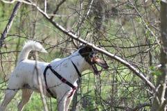 狗在森林里 图库摄影