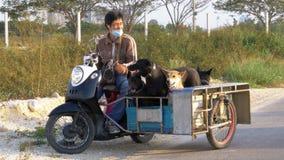 狗在泰国摩托车的拖车坐有婴儿推车的 聚会所 股票视频