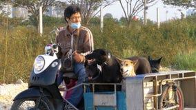 狗在泰国摩托车的拖车坐有婴儿推车的 聚会所 股票录像