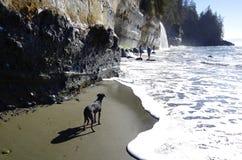 狗在海浪附近等待它的大师 库存图片