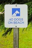狗在海滩标志不允许的白色 免版税库存照片