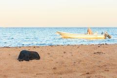 狗在海滩放松 免版税图库摄影