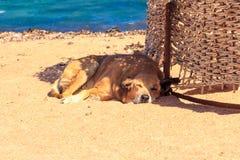 狗在海滩放松 免版税库存图片