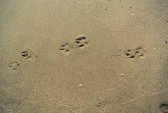 狗在海滩的脚印刷品 库存照片