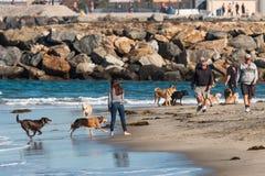 狗在狗海滩任意跑在圣地亚哥 免版税库存图片