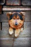 狗在狗窝 免版税库存照片