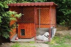 狗在狗窝 免版税图库摄影