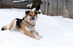 狗在白色雪说谎 免版税库存照片