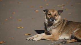 狗在秋天公园 图库摄影