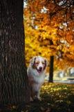 狗在秋天公园 免版税库存图片