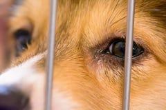 狗在笼子哭泣 库存图片