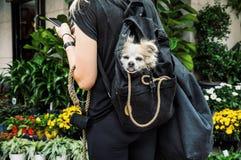 狗在纽约 图库摄影