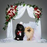 狗在花曲拱下的婚礼夫妇 免版税库存照片