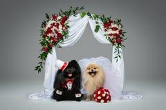 狗在花曲拱下的婚礼夫妇 库存图片
