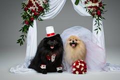 狗在花曲拱下的婚礼夫妇 图库摄影