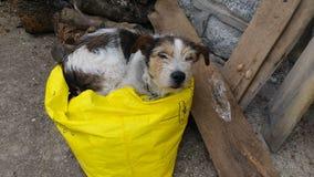 狗在袋子喜欢睡觉 免版税图库摄影