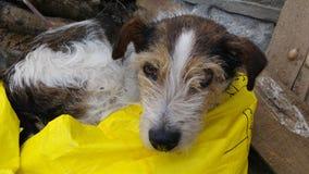 狗在袋子喜欢睡觉 库存照片