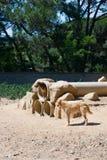狗在西班牙 免版税库存图片