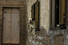 狗在视窗里 图库摄影