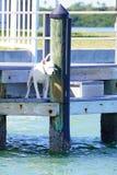狗在豪华海滨别墅的小船船坞 库存图片