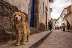 狗在镇 免版税库存图片