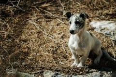 狗在阿尔布费拉葡萄牙 库存图片