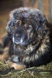 狗在饲槽冬天 免版税库存图片
