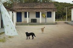 狗在离开的村庄 库存照片