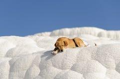 狗在Pamukkale 免版税图库摄影