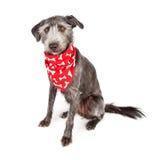 狗坐的佩带的红色骨头班丹纳花绸 免版税库存照片