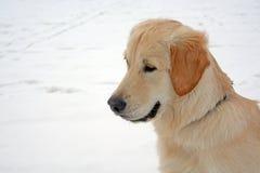 狗坐雪 免版税图库摄影