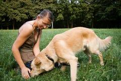 狗培训 库存图片