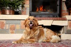狗壁炉金黄位于在猎犬附近 免版税库存图片