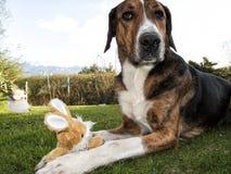 狗复活节兔子 图库摄影