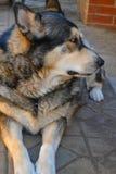 狗外形 免版税图库摄影