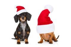 狗夫妇圣诞节假日 免版税库存图片