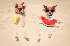 狗夫妇在海滩和西瓜的 图库摄影