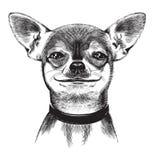 狗奇瓦瓦狗。 例证 免版税库存照片