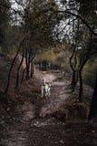 狗奔跑在森林里 库存照片