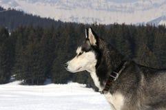 狗好的雪 免版税库存图片