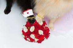 狗婚礼在花束的夫妇爪子 图库摄影