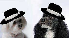 狗婚礼 库存照片
