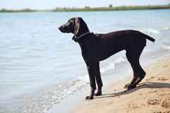 狗孑然 免版税库存图片
