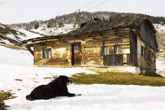 狗守卫的老被放弃的房子 免版税图库摄影