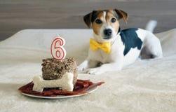 狗宠物的款待在他的第六个生日 选择聚焦 图库摄影